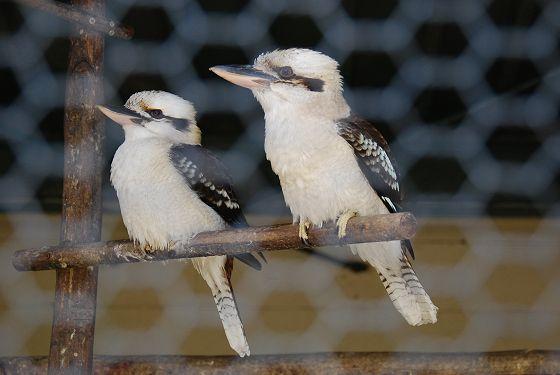 高岡古城公園動物園:ワライカワ...